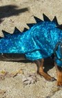 Halloween dog costumes for our furry fashionistas