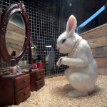Make-up Bunny - The Village Pet Store and Charcoal Grill